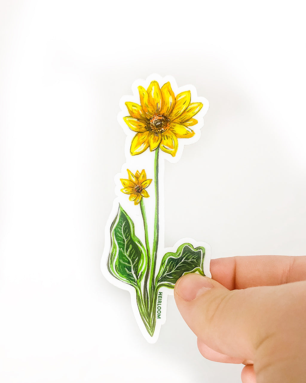 Balsamroot Wildflower Sticker | Vinyl Decal