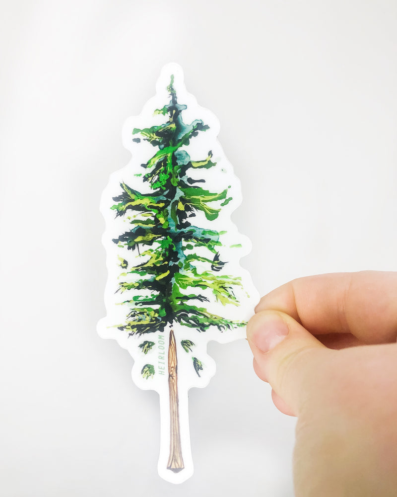 Sugar Pine Tree Sticker | Art Decal