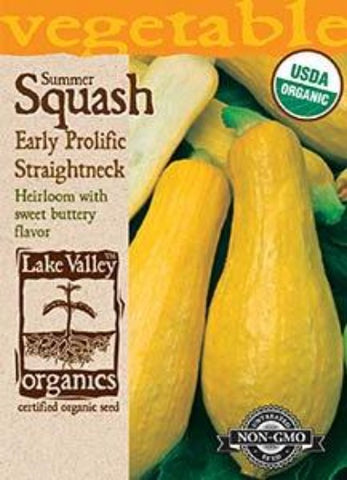 Organic Squash Summer Early Prolific Straightneck