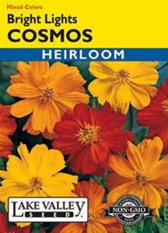 Cosmos Bright Lights Mixed Colors