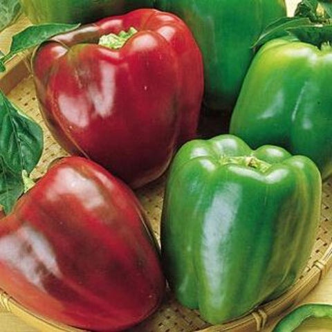 'California Wonder' Sweet Bell Pepper