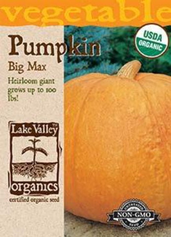 Organic Pumpkin Big Max Heirloom
