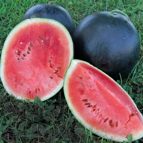 Watermelon 'Black Diamond'