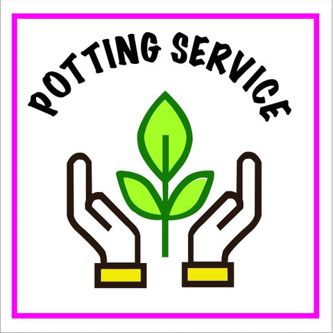 PBN Services Design Pot