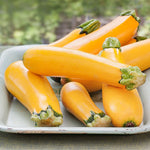 Zucchini 'Gold Rush' Summer Squash
