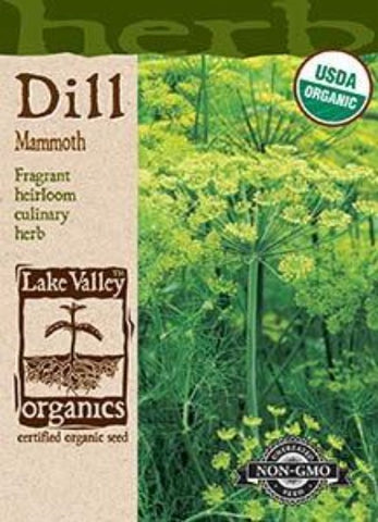 Organic Dill Mammoth Heirloom
