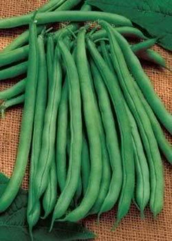 Farmer's Market Fresh Picked Green Beans / Price per lb.
