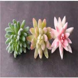 Artificial White Pink Frosted Succulent Silk