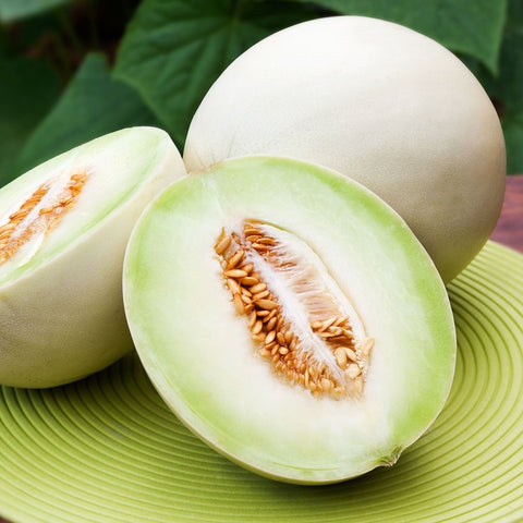 Cantaloupe 'Honeydew' Melon
