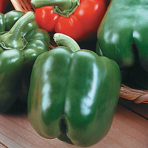 'King Arthur' Bell Pepper