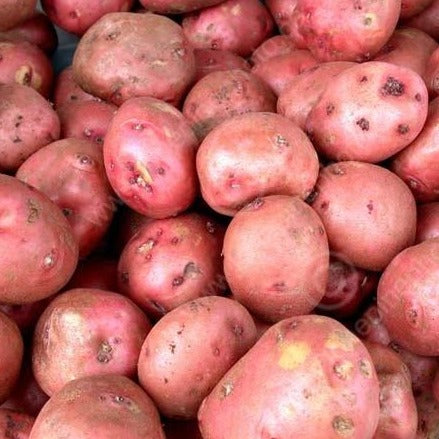 Red Viking Potato per lb