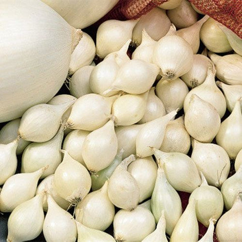 White Colorado Onion Sets (2nd Year Seeds)