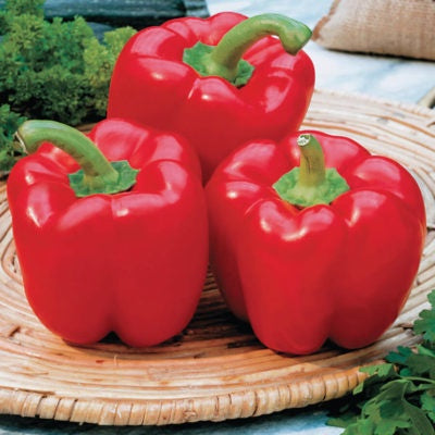 'Red Beauty' Sweet Pepper (Heirloom)