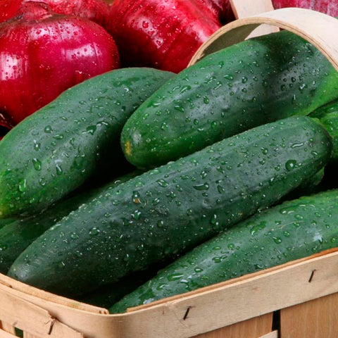 Cucumber 'Sweet Success' Burpless