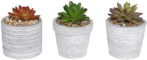Alpine Decorative Succulent w/pot