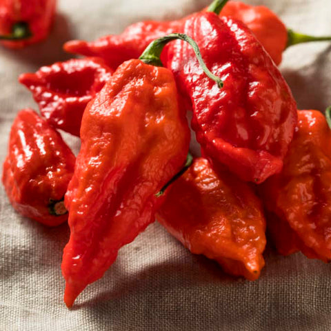 Ghost Hot Pepper bjut-jolokia