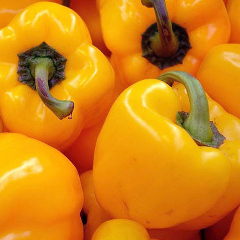 'Golden California Wonder' Sweet Bell Pepper