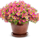 Petunia Supertunia® Series