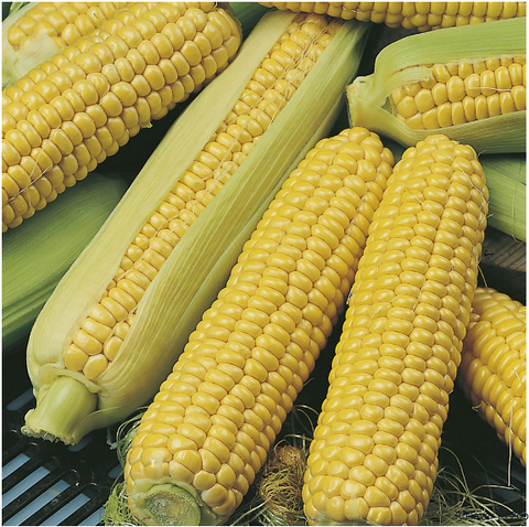 Farmer's Market Sweet Corn / Price per each