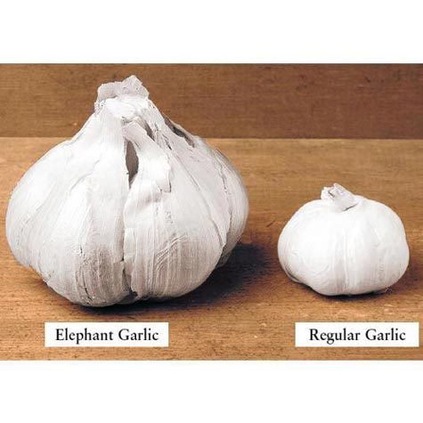 Garlic Elephant Set per lb.