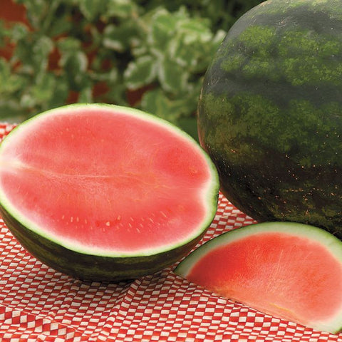Watermelon 'Red Ruby Seedless'