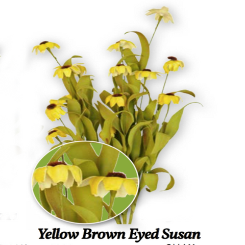 GF FM300 Medium Yellow Brown Black-Eye Susan