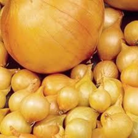 Yellow Colorado Onion Sets (2nd Year Seeds)/lb