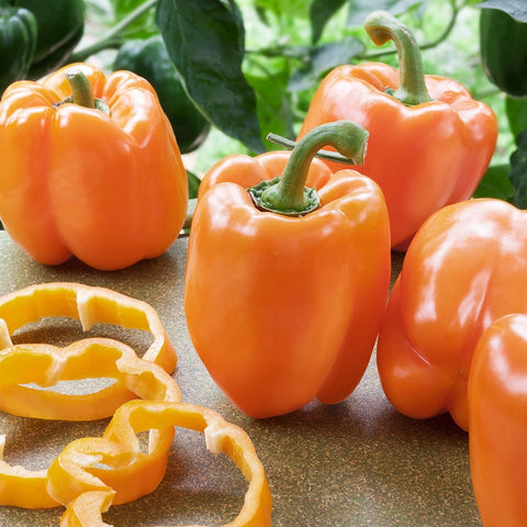 'Orange Blaze' Sweet Pepper Hybrid