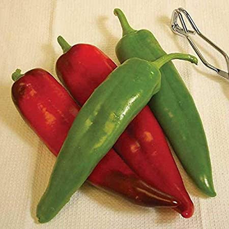 'Biggie Chile™' Hot Pepper Hybrid Determinate