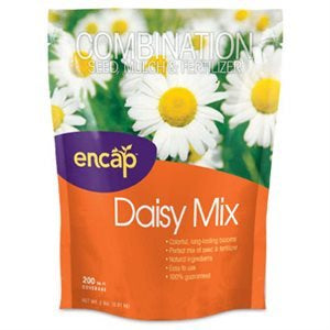 Encap Daisy Cut Flower Mix