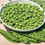 PBN Pea Shelling 'Little Marvel'