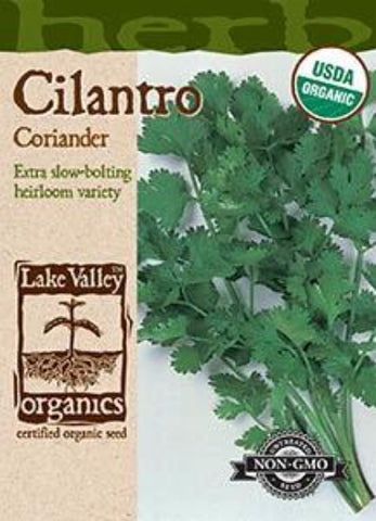 Organic Cilantro (Coriander) Heirloom