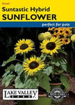Sunflower Suntastic Hybrid