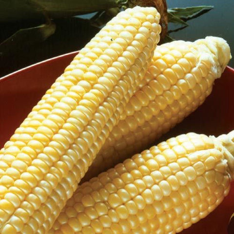 PBN Corn Sweet 'Incredible'