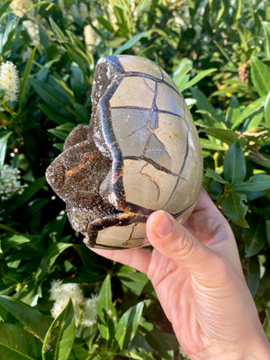 Septarian Dragon Egg Polished with Druze - Varoius Weights - Confidence Patience and Strength