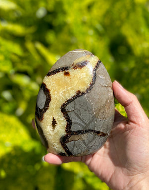 Septarian Dragon Polished Freeform Stone / 1-2 pounds each / Fossilized mud / Supports Confidence Patience and Strength