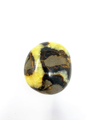 Septarian Dragon Polished Palm Stone / Fossilized mud / Supports Confidence Patience and Strength