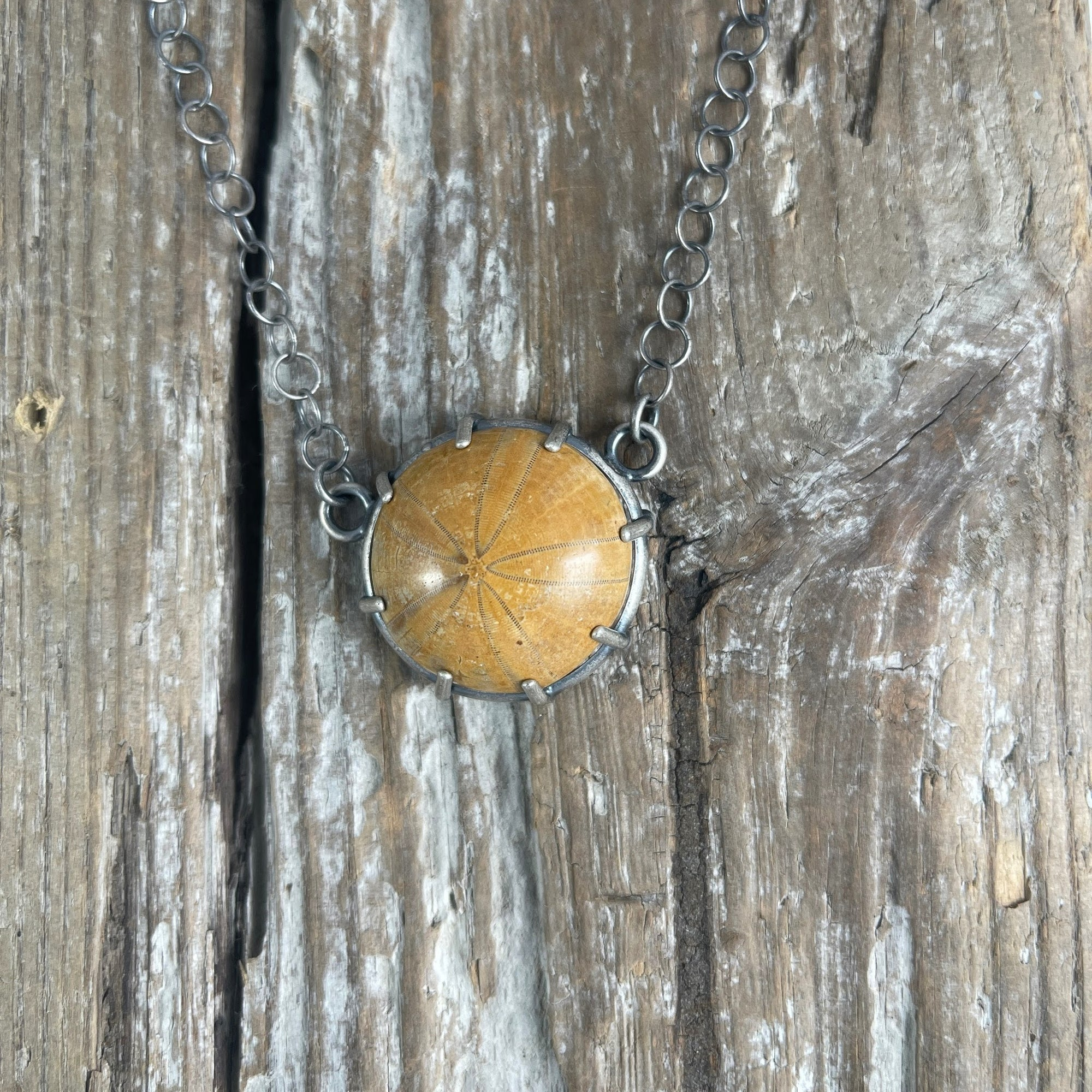 Petrified Sand Dollar Necklace