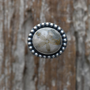 Petrified Sand Dollar Ring