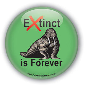 Extinct is Forever  - Walrus Button/Magnet