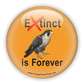 Extinct is Forever - Peregrine Falcon Conservation Button/Magnet