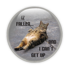 Iz Fallen and I Can't Get Up - Cats & Dogs
