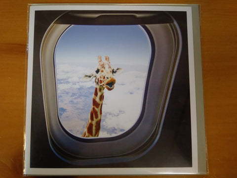 Hilarious Giraffe in Airplane Window Occasion Card