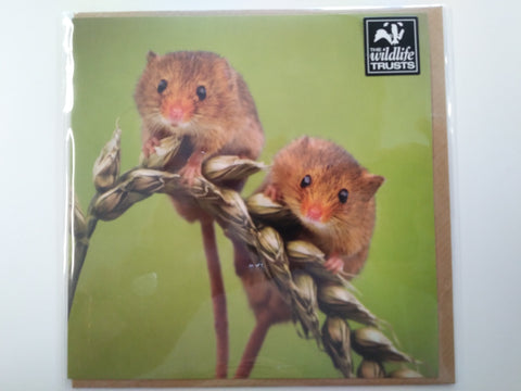 Cute Image of Mice on Wheat Stalk Greeting Card