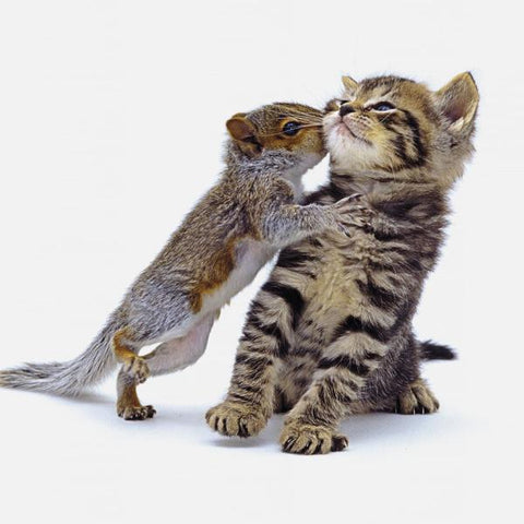 Squirrel And Kitten Photo Greeting Card