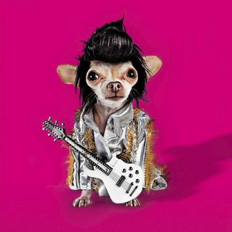 Chihuahua Doing Elvis Impression Greeting Card