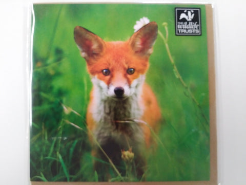 Young Fox Colour Photo Greeting Card