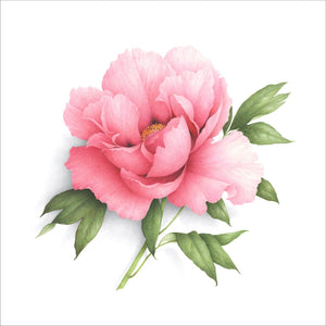 Pivoine rose saumon