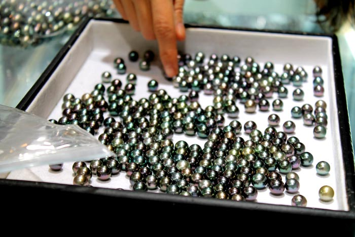 a tray of Tahitian pearls from Gambier Islands