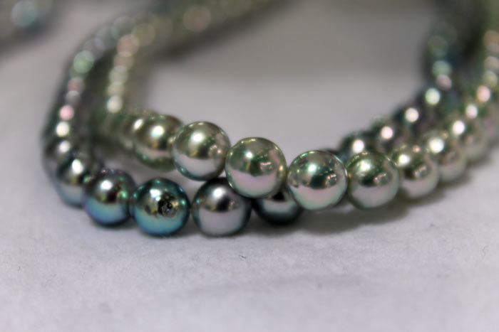 Akoya pearls in different shades of blue